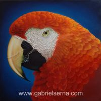 Guacamaya Roja - Detail - Oil Painting by Gabriel Serna